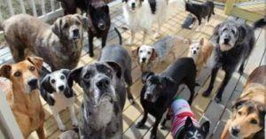 This Special Center Is A Haven For Senior Dogs To Live Out Their Days