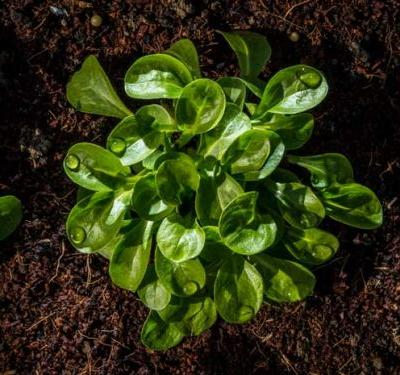 What to plant in a New Zealand vegetable garden in April