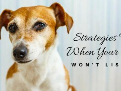 Strategies For When Your Dog Won't Listen