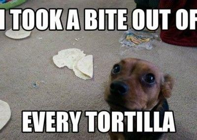Sheldon, the Tortilla Taste-Tester My mom was going to enjoy