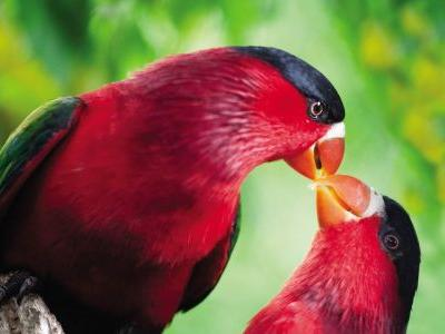6 exotic birdwatching destinations in Papua New Guinea