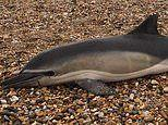 Scientists examining 50 dead dolphins, seals and whales ALL had plastic in their system