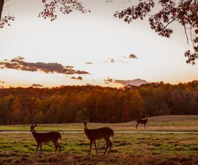 A Classic Pennsylvania Fall at Nemacolin Woodlands Resort
