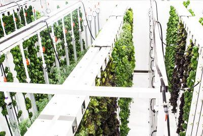 $200M Invested For a Global Network of Indoor Farms? That's Plenty