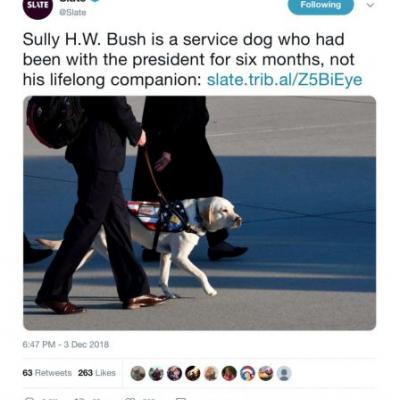 Slate Ruined the Heartwarming Story of George H.W. Bush's Service Dog Sully and Animal Lovers are Irate: 'You Soulless' Monsters
