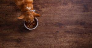 Is The FDA Doing Enough To Keep Euthanasia Drugs Out Of Your Dog's Food?