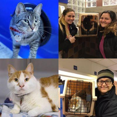 Two 18 month old cats found their new loving homes last night!