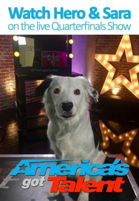 Exclusive Behind the Scenes on Talented Superstar Hero the Super Collie