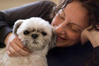 3 Great Ways To Strengthen Your Bond With Your Shih Tzu