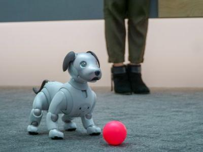Sony's Aibo robot dog is significantly more expensive than a real pooch