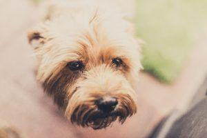 4 Breeds at Risk of Colitis - Learn How to Keep Your Dog Safe