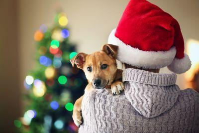 8 Pet Safety Tips for Christmas Day