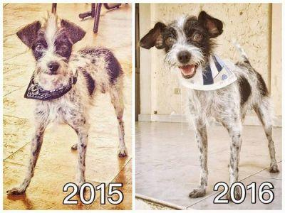 Once Abused, Emmet Overcomes His Past to Become a Confident, Happy Dog
