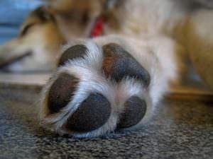 6 Summertime Tips To Keep Your Dog's Paws Safe