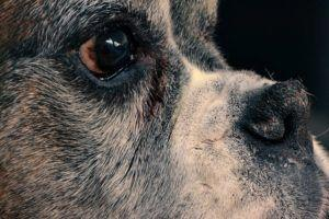 How To Heal Your Dog's Dry Nose Naturally