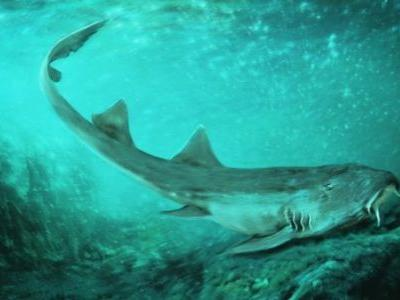 'Galagadon' shark named after '80s arcade game due to its oddly shaped teeth