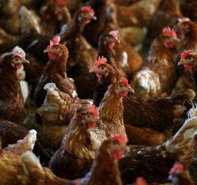 The US indicted 4 poultry company executives over alleged chicken price-fixing