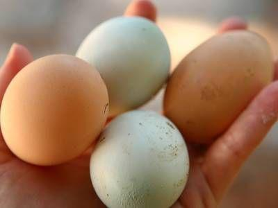 Are backyard eggs really that dangerous?