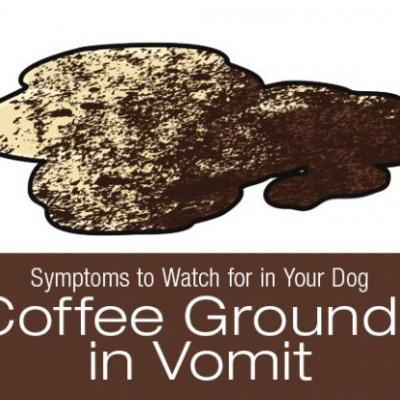 Symptoms to Watch for in Your Dog: Coffee Grounds in Vomit