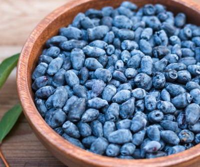 'Unexplored': Could haskap berries improve blood pressure and memory in older adults?
