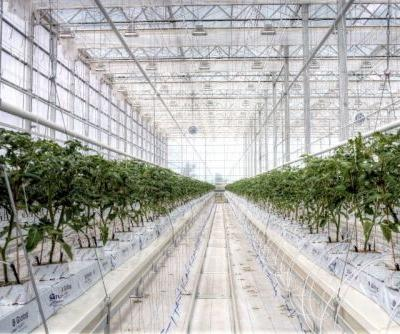 With New Cash, iUNU to Help More Greenhouses Monitor, Manage Plants