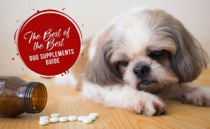 The Best Dog Supplements Guide