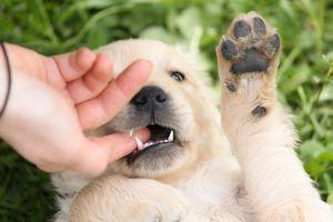 Vets Advise Pet Owners To Wash Hands To Prevent Spread Of Puppy Disease