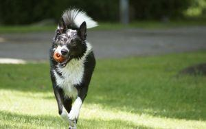 3 Reasons Why Dogs Need a PREbiotic Just As Much As A PRObiotic