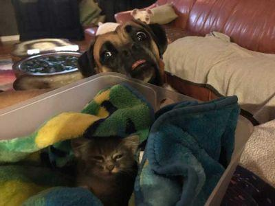 Man Rescues Kitten From Car Engine Compartment And His Dog Won't Leave His Side