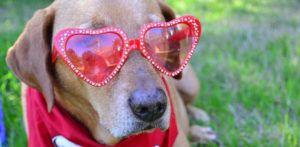 Fido + Fluffy's Freebie Friday Gets Ready for Valentine's Day