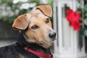 5 Incredible Things Dogs Can Sense Before They Happen