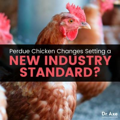 Perdue Chicken Changes Setting a New Industry Standard?