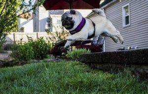 """Is Your Dog a """"Weekend Warrior""""? Make Sure You're Taking Care Of His Joints In These 5 Ways"""