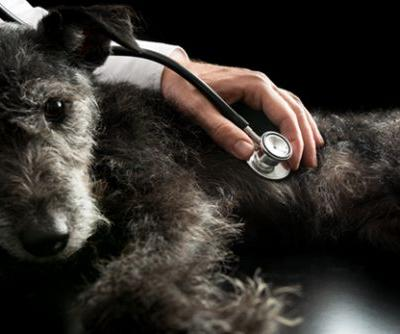 Dog Longevity Survey: How Important Are Wellness Exams for Longevity?