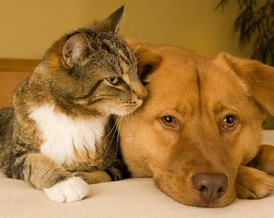 Read the Label: Getting Flea and Tick Medication Right
