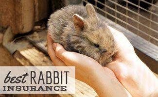 Best Rabbit Insurance: Hop Your Bunny Into Coverage Today
