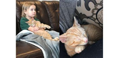"""We adopted """"Tommy"""" the kitten in November and"""