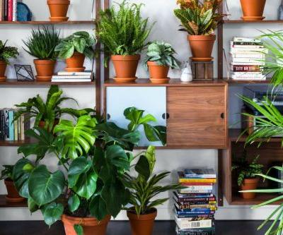 Startup Bloomscape Aims to Make Urban Houseplant Delivery Blossom