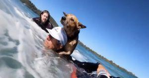 Board Rider Saves Kayaker's Dog From Drowning In Rough Waters