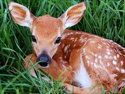 Chronic Wasting Disease Found in Deer in 24 States
