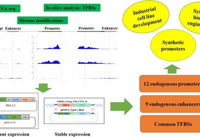Novel Promoters Derived from Chinese Hamster Ovary Cells via In Silico and In Vitro Analysis