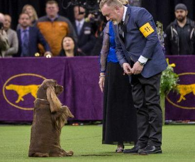 All About the Breeds Behind the Westminster Group Winners