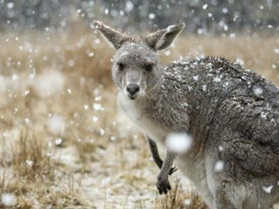 Filmed Before The Fires, 'Seven Worlds' Shows Off Australia's Amazing Wildlife
