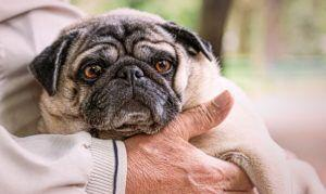 What Dietary Supplements Should I Consider Giving My Senior Dog?