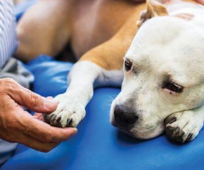 Addison's Disease in Dogs -Why It's So Hard to Identify