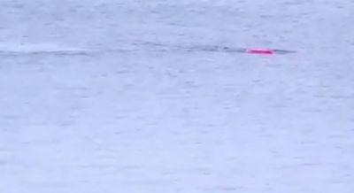 Video shows great white shark attacking kayaker in California