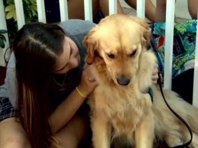Comfort dogs brought to help console Florida students after shooting