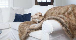 There's No Excuse to Not Let Your Dog On The Couch With These Throws With a Hidden Feature You'll Love