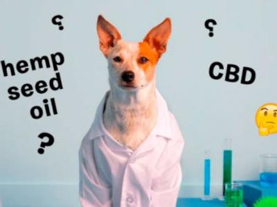 What's The Difference Between Hemp Oil & CBD Oil For Your Dog?