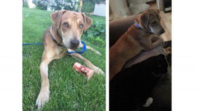 We adopted Cooper almost two months ago. He had been adopted and